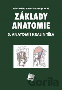 anatomia topografia atlas Grim medicina