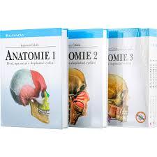 Cihak anatomia atlas medicina