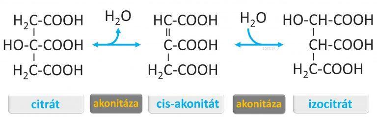 citratovy-krebsov-cyklus - izocitrát
