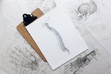 skúška z anatómie medicína brno blog