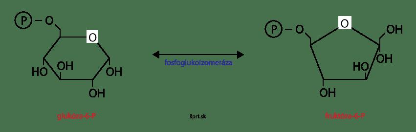 glykolýza izomerizácia glukóza-6-P