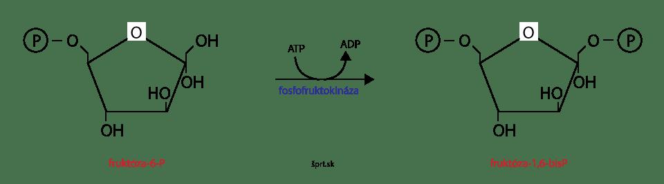 glykolýza fosforylácia