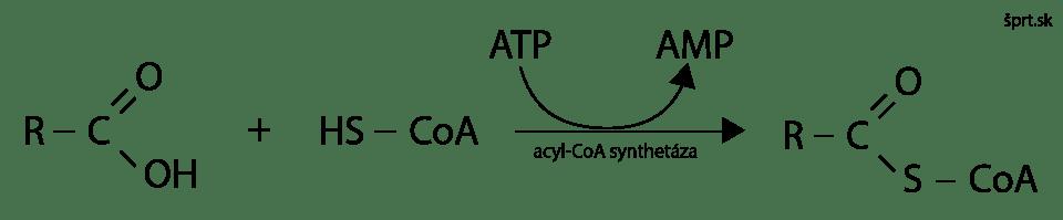 odbúravanie mastných kyselín