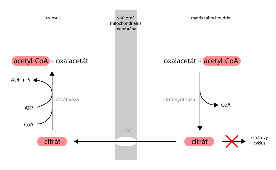 glycerolfosfátový člunek
