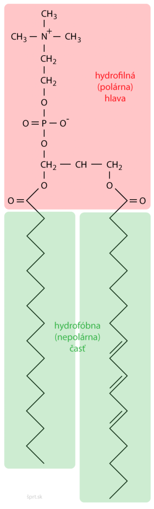 zložené lipidy