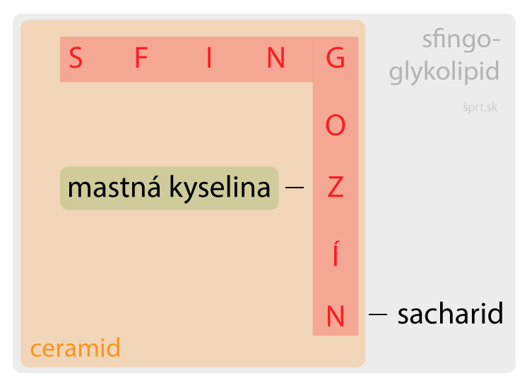 glykosfingolipidy