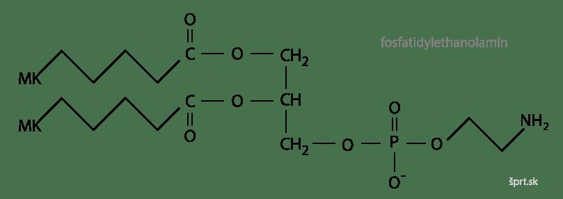 fosfatidylethanolamín