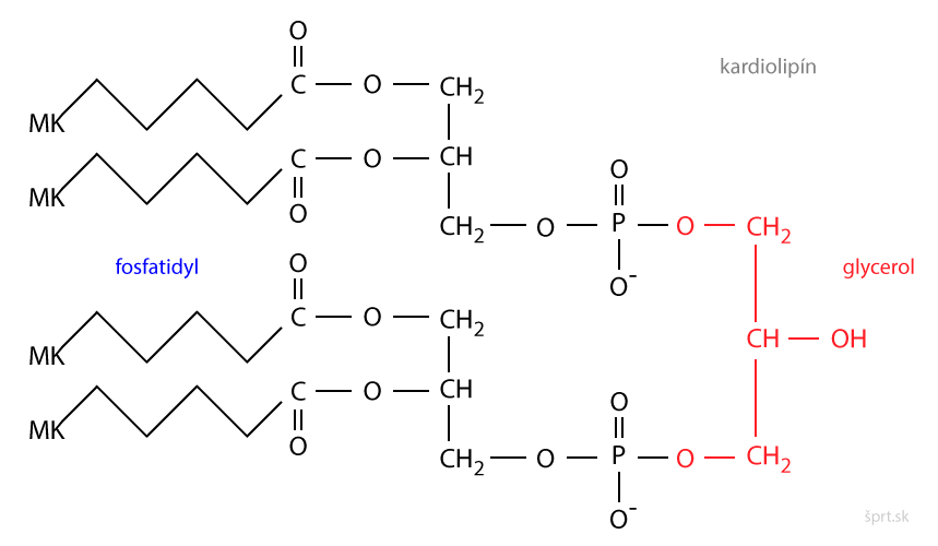 kardiolipín