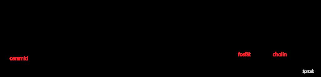 sfingomyelin