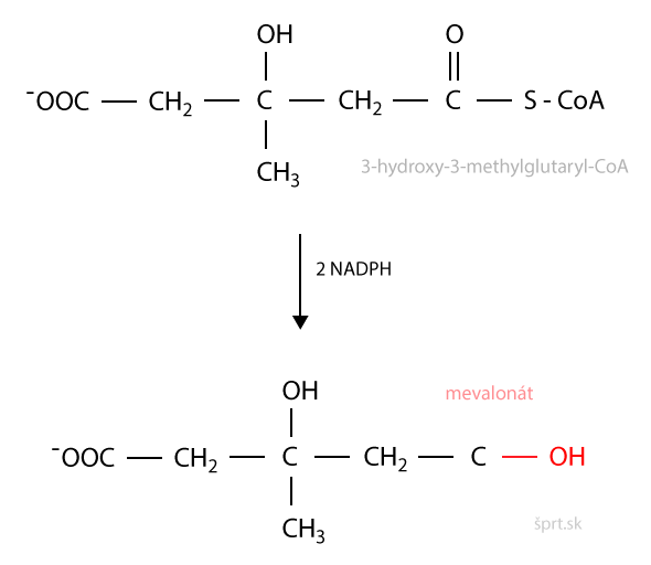 syntéza cholesterolu